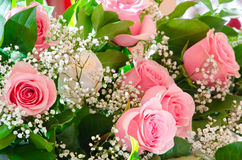 Bouquet of pink roses. A bouquet - a white rose among pink ones Stock Images