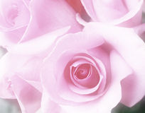Bouquet of pink roses. Bouquet of beautiful soft pink roses Stock Photography