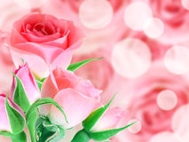 Bouquet pink roses royalty free stock photo
