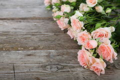 Bouquet of pink roses Stock Image
