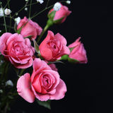 Bouquet of Pink Roses on black Royalty Free Stock Photo