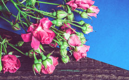 Bouquet of pink roses on a blue sheet of paper Stock Images