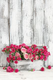 Bouquet of pink roses in box. Bouquet of crimson and pink spray roses in wood box on white wooden table against shabby wall Stock Photo