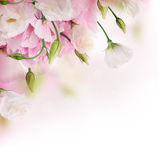 Bouquet of pink roses and butterfly Stock Photo