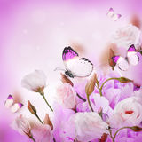 Bouquet of pink roses and butterfly Royalty Free Stock Photography