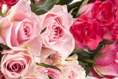 Bouquet of pink roses, close up Stock Images