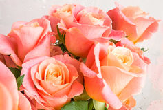 A bouquet of pink roses Royalty Free Stock Photos