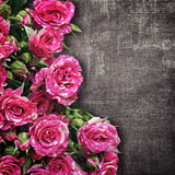 Bouquet of pink roses on a dark fabric background Royalty Free Stock Photos
