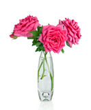 Bouquet of pink roses flowers in vase isolated on white backgrou Royalty Free Stock Photos