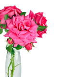 Bouquet of pink roses flowers in vase isolated on white backgrou Stock Photos