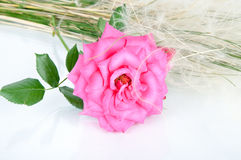 Bouquet of pink roses flowers  on white backgrou Stock Photo