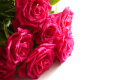Bouquet of pink roses isolated on white. Stock Photo