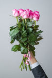 Bouquet of pink roses in a male hand Royalty Free Stock Photography