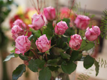 Bouquet of pink roses on natural background. Soft focus in natural light stock photography