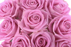 Bouquet of pink roses over white Stock Image