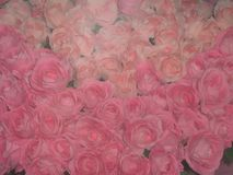 A bouquet of pink roses Royalty Free Stock Images