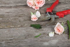 Bouquet of pink roses and secateurs Stock Photography