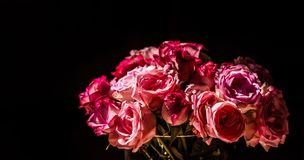 A bouquet of pink roses in sunlight. A bouquet beautiful of pink roses in sunlight with black background stock images