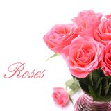 Bouquet of pink roses in vase on the white background (with easy removable text).  royalty free stock images