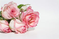 Bouquet pink roses on white background Stock Images