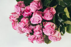 Bouquet of pink roses on white background Royalty Free Stock Photos