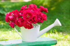 Bouquet of pink  roses in white watering can Royalty Free Stock Photos