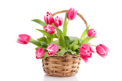 A bouquet of pink tulips Royalty Free Stock Photos