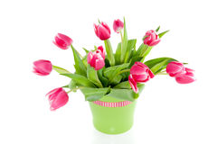A bouquet of pink tulips Royalty Free Stock Photography