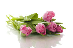 Bouquet of pink tulips. Isolated on white background royalty free stock images