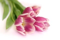 Bouquet of pink tulips Royalty Free Stock Image