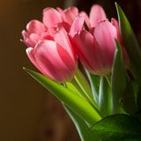Bouquet of pink tulips Royalty Free Stock Photos
