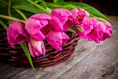 Bouquet of pink tulips in the basket closeup Stock Images