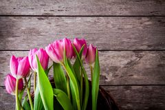 Bouquet of pink tulips in the basket Royalty Free Stock Photo