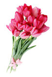 Bouquet of pink tulips Royalty Free Stock Photography