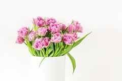 Bouquet of pink tulips in bucket. Fresh spring easter flower. White background , copy space Stock Images