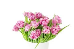 Bouquet of pink tulips in bucket. Fresh spring easter flower. White background , copy space. Isolated on white Stock Photos