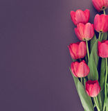 Bouquet of pink tulips on colored background Stock Photo