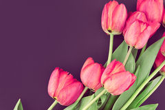 Bouquet of pink tulips on colored background with space for text Royalty Free Stock Photos