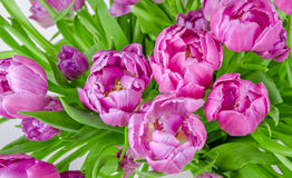 Bouquet of pink tulips in flowerpot Royalty Free Stock Photo