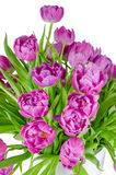 Bouquet of pink tulips in flowerpot isolated on white Stock Image