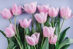 Bouquet of Pink tulips flowers over light blue background. Greeting card or wedding invitation. Flat lay, top view, copy space royalty free stock photo