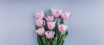 Bouquet of Pink tulips flowers over light blue background. Greeting card or wedding invitation. Flat lay, top view, copy space. Wide composition stock image