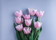 Bouquet of Pink tulips flowers over light blue background. Greeting card or wedding invitation. Flat lay, top view, copy space. stock photography