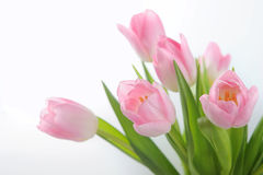 Bouquet of the pink tulips Royalty Free Stock Photo