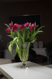 Bouquet of pink tulips in an interior. In a glass vase on dark background Stock Photos
