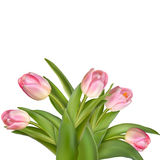 Bouquet of pink tulips isolated over white. EPS 10 stock illustration