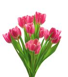 Bouquet of pink tulips isolated on white Stock Images