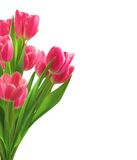 Bouquet of pink tulips isolated on white Royalty Free Stock Photography