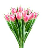 Bouquet of pink tulips isolated on white Royalty Free Stock Photos