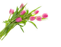Bouquet of pink tulips isolated on white Royalty Free Stock Images